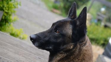 Un chien a mordu plusieurs passants au bois de Boulogne