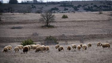 Le parc photovoltaïque doit s'implanter sur une zone du sud Larzac, classée Natura 2000 et patrimoine mondial de l'Unesco. (image d'illustration)