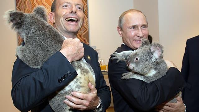 Le Premier ministre australien Tony Abbottt, le président russe Vladimir Poutine, et deux koalas.
