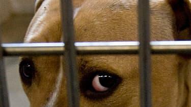 La SPA a accueilli 4.006 animaux abandonnés entre le 1er juin et le 15 août 2016, contre 3.218 durant la même période l'été dernier