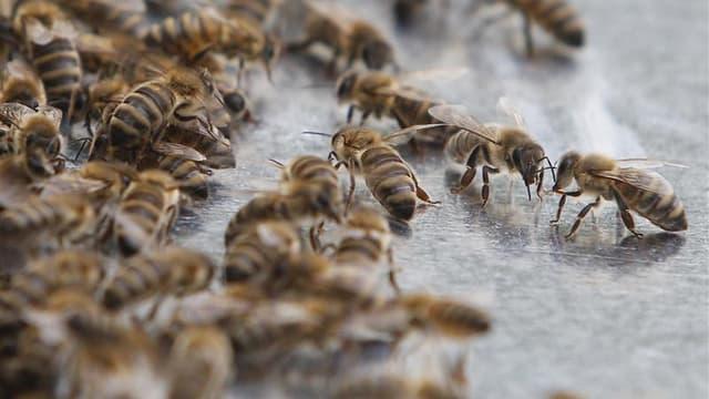 La députée écologiste Laurence Abeille a déposé lundi au nom de son groupe une proposition de résolution afin de protéger les abeilles menacées par les pesticides. /Photo prise le 11 juillet 2012/REUTERS/Lisi Niesner