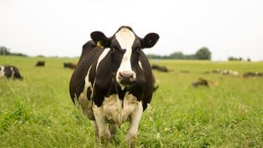 Les éleveurs laitiers français réclament une hausse de trois centimes du prix par litre de lait.