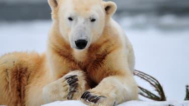Knut, dans le zoo de Berlin en 2010.