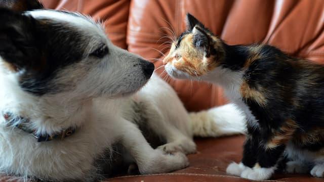 Les animaux domestiques peuvent avoir des complications de santé liées aux fortes chaleurs. (image d'illustration)