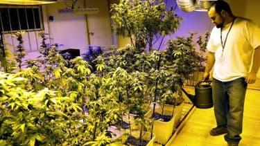 Comme le Colorado, l'Etat de Washington va légaliser la vente du cannabis