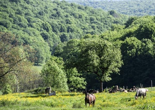 Le nouveau parc national de Bourgogne-Champagne photographié en 2017.