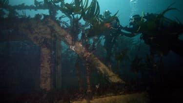 Des plongeurs explorent l'épave du super pétrolier Amoco-Cadiz à 25 mètres de profondeur, au large de la côte de Portsall, dans le nord-ouest de la France, le 5 octobre 2018. (image d'illustration)