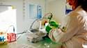 Plusieurs sociétés françaises se lancent dans les tests sérologiques. Ils sont réalisés à partir d'une prise de sang pour détecter la réponse immunitaire de l'organisme, via des anticorps fabriqués contre le virus par le patient testé.