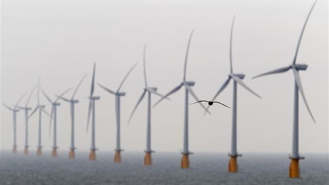 Un appel d'offres sur l'éolien en mer au large du Tréport (Seine-Maritime) et de Noirmoutier (Vendée) sera lancé d'ici décembre, a déclaré Jean-Marc Ayrault lors du discours de clôture de la Conférence environnementale organisée par le gouvernement frança