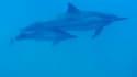 Une naissance de dauphin est rare en captivité.
