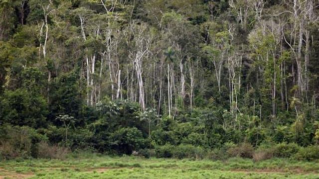 La déforestation de l'Amazonie brésilienne est tombée à son niveau le plus bas depuis 23 ans, révèle une étude gouvernementale dont les auteurs attribuent cette évolution aux renforcement des mesures contre l'abattage clandestin. /Photo d'archives/REUTERS
