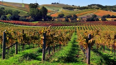 La Napa Valley, en Californie, est l'une des zones viticoles les prestigieuses des Etats-Unis.