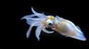 Un organisme marin.