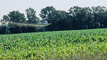 Hélicoptère projettant des pesticides dans un champ de maïs du Wisconsin, aux Etats-Unis, en novembre 2010.