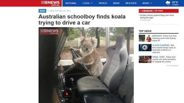 Sam Box a tenu à envoyer cette photo d'un koala au volant de la voiture au site d'information 9news.com, tant il était lui-même incrédule.