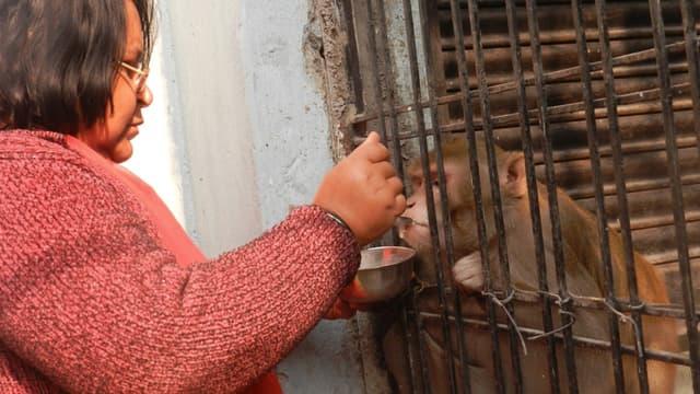 Le singe Chunmun possède sa propre chambre qu'il partage avec sa compagne Bitti Yadav.