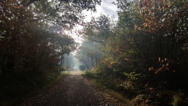 La forêt de Sénart.
