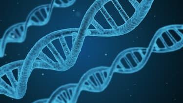 Structure de la double hélice d'ADN