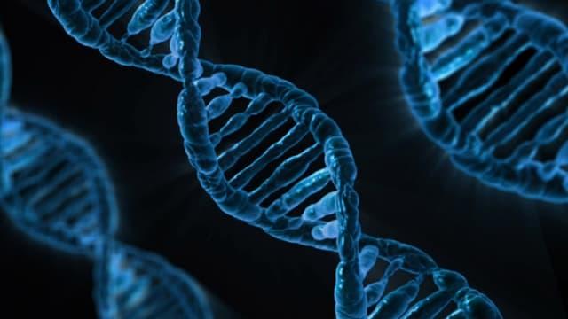 Le matériel génétique d'un organisme est composé à la fois de séquences codantes et d'autres non codantes. Les scientifiques ignorent lesquelles sont justement utiles. Il faut donc faire d'innombrables essais pour trouver les dizaines de millions de configuration pour une même structure d'acides aminés, donc d'une même protéine.