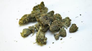 Fleurs de cannabis contenant uniquement du cannabidiol, sans THC, dans un magasin parisien.