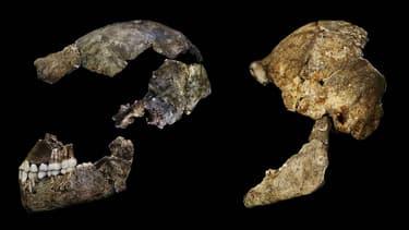 Les scientifiques ont mis au point une méthode pour déterminer le sexe d'un squelette grâce à un petit organe.