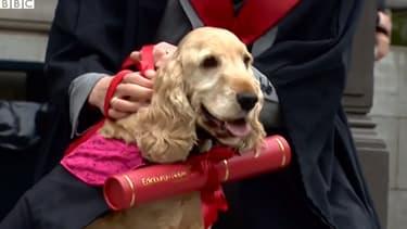 Fudge, chien fidèle diplômé de l'université d'Edimbourgh.