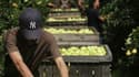 Selon le ministre français de l'Agriculture, Bruno Le Maire, les aides aux agriculteurs seront maintenues malgré les restrictions budgétaires décidées par le gouvernement. /Photo d'archives/REUTERS/Stéphane Mahé