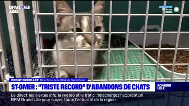 """Saint-Omer: """"triste record"""" d'abandon de chats"""