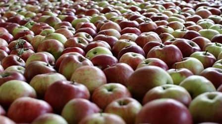 Préférer une pomme à un biscuit en cas de petite faim est non seulement souhaitable pour éviter le surpoids mais pourrait aussi réduire le risque de fractures, selon une étude publiée par l'American Journal of Clinical Nutrition. /Photo prise le 10 octobr