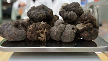 Des truffes. (image d'illustration)