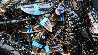 Des homards à Paimpol, dans les Côtes-d'Armor, en 2016 (photo d'illustration)
