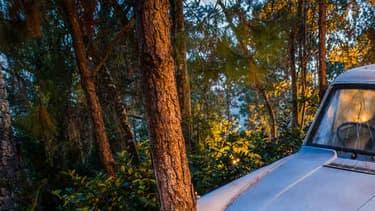 La Ford Anglia du père de Ron finit sa course volante dans un arbre de la forêt interdite.