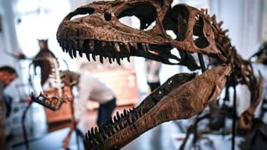Un Allosaurus et un Camptosaurus étaient mis aux enchères à Paris