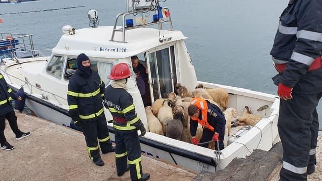 Le sauvetage des animaux au large des côtes roumaines ce mardi.