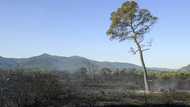 Zone parcourue par l'incendie, le 17 août 2021 près de Gonfaron, dans le Var