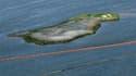 Barrages flottants pour protéger une petite île au large de la Louisiane de l'afflux de nappes de pétrole. Le gouvernement américain a intensifié ses efforts pour éviter une catastrophe écologique alors que l'énorme marée noire s'approche du delta du Miss