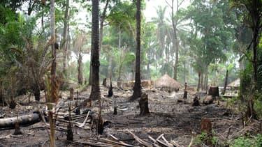 Des huttes de déplacés Zande dans une forêt du Congo.
