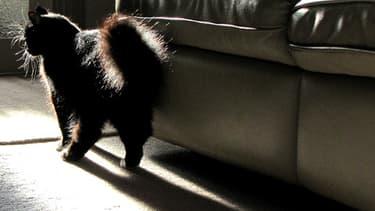 L'ADN du chat a été retrouvé sur le corps de la victime.