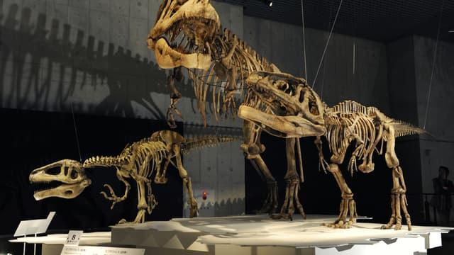 Des squelettes de Megaraptor et de Mapusaurus, exposés au musée des Sciences de Tokyo, le 13 mars 2009.