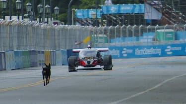 Un chien sur la piste, heureusement évité par DevBot 1.