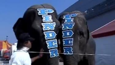 Les deux éléphantes du cirque Pinder, Baby et Népal.