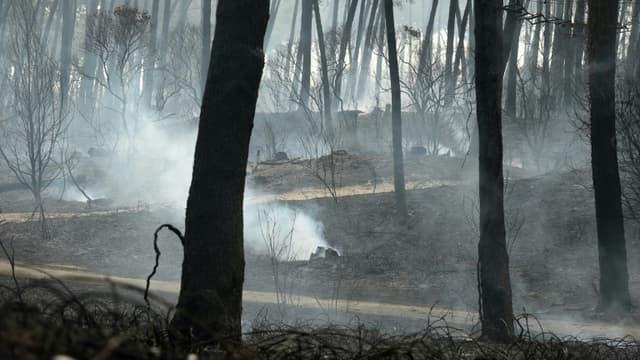 La forêt de Chiberta après un incendie, le 31 juillet 2020 à Anglet, dans les Pyrénées-Atlantiques.
