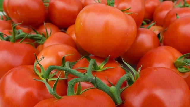 Des tomates (photo d'illustration).