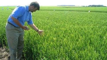 """Monsanto ne fait plus pression pour le développement des cultures génétiquement modifiées dans la plupart des pays d'Europe en raison de l'opposition qui reste forte dans de nombreux pays. """"Nous sommes arrivés à la conclusion qu'il n'y avait pas de large"""