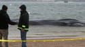 Une baleine d'environ 9 mètres de long a été retrouvée, mercredi matin, sur une plage de New York.