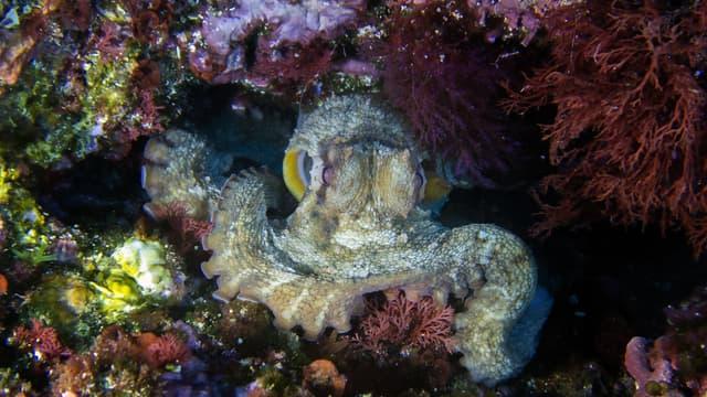 Photo d'illustration d'une pieuvre