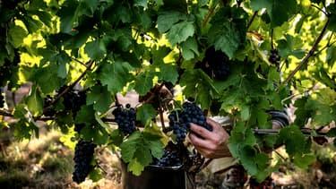 Le syndicat des vignerons des Côtes du Rhône accusé d'entente