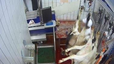 Capture d'écran des images de l'abattoir de l'indre diffusées par l'association L214