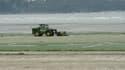 Depuis le début de l'été, 32.000 m3 d'algues vertes ont été ramassées en Bretagne...