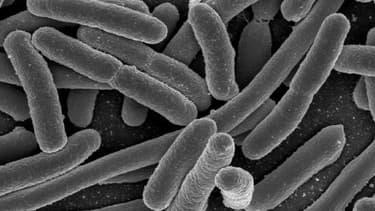 Bactéries E. Coli, grossies au microscope électronique.